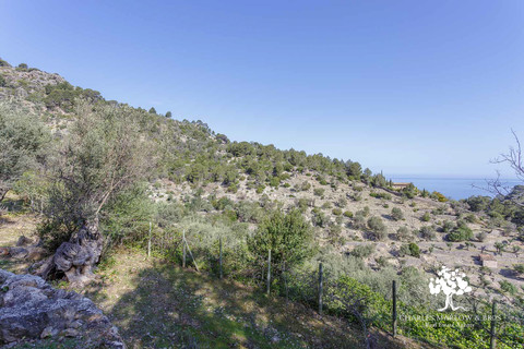 Plot of land ready for the perfect Deia home